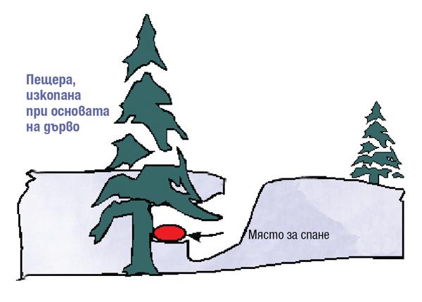 пещера изкопана при основата на дърво