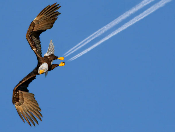 Орел лупинги - 5