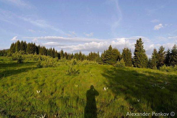 Рид Средня, Западни Родопи