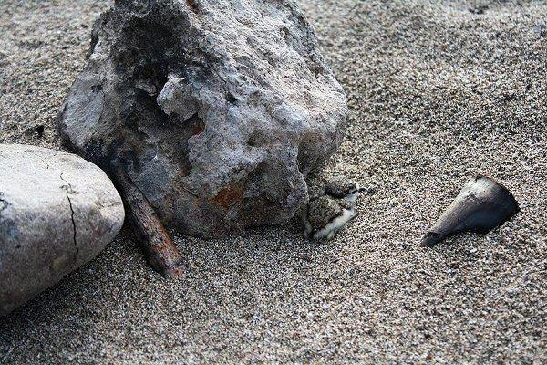 Морският дъждосвирец обитава плажове, пясъчни коси, острови и дюни, както и крайбрежни бракични или солени лагуни и места за солодобив.