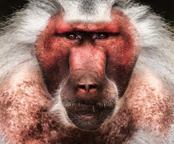 Изкуството в лицата на животните