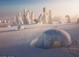 Снежните гори на Лапландия