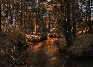 река Планщица