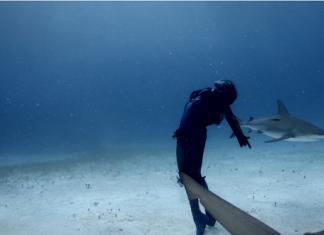 Подводен танц с акулите
