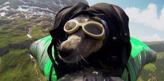 Дийн Потър - Първият уингсют полет с куче