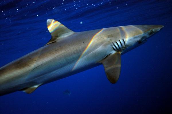 Shark-Week_image_2