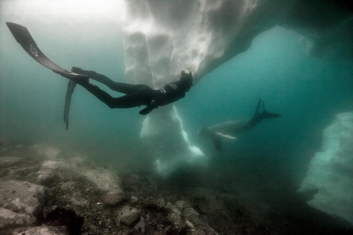 Свободно гмуркане - Антарктида