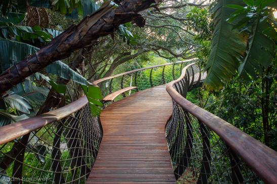 Разходка над гората - Кейптаун