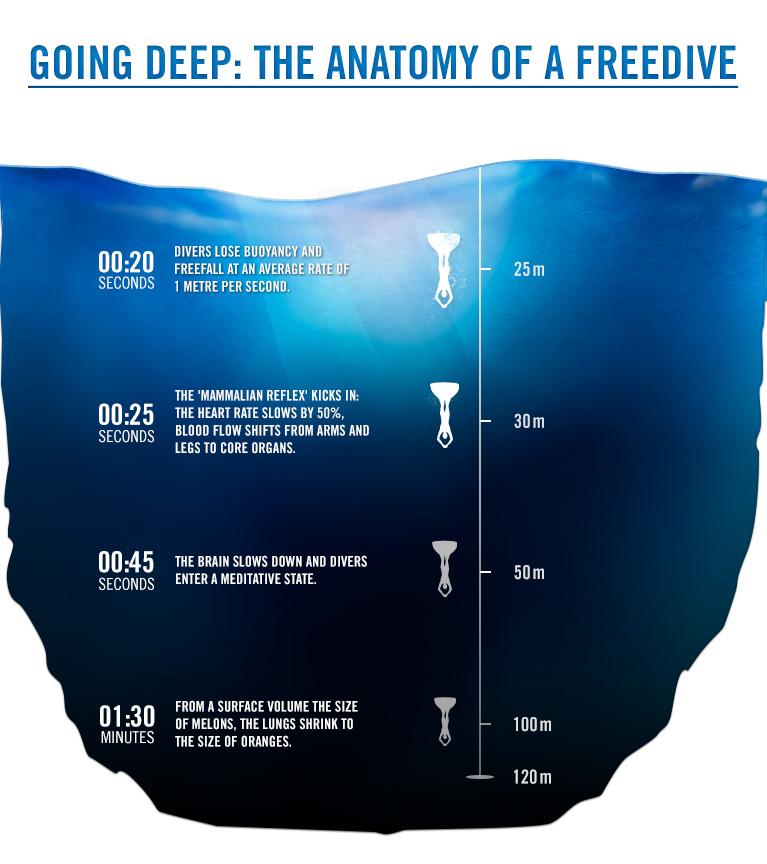 Инфографика: анатомия на свободното гмуркане