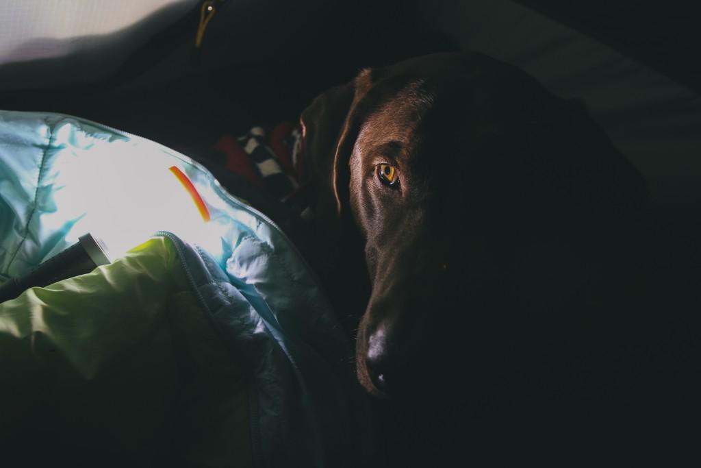 С куче на къмпинг