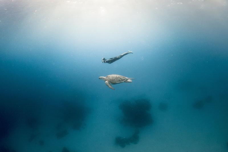 фрийдайвинг.морска костенурка
