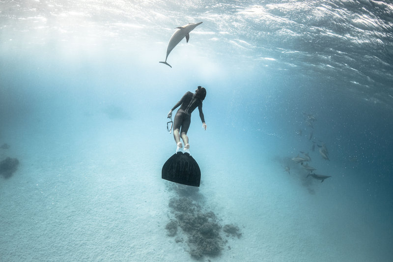 фрийдайвинг с делфини