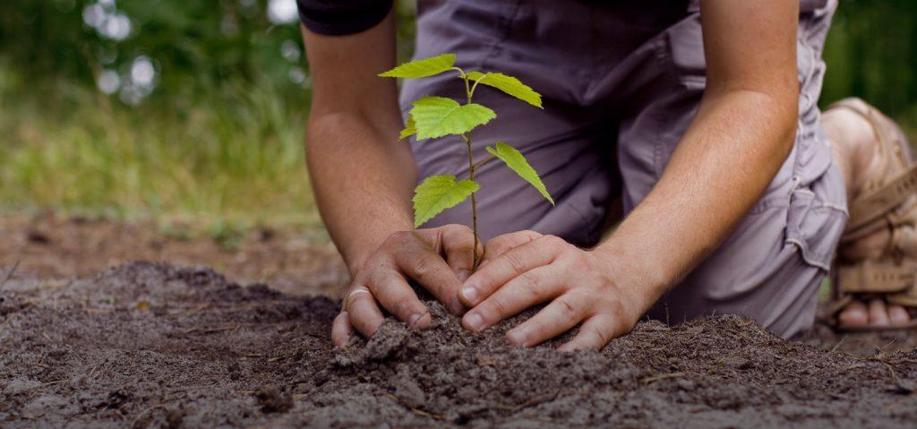 Залесяване
