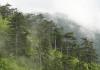 забравените гори