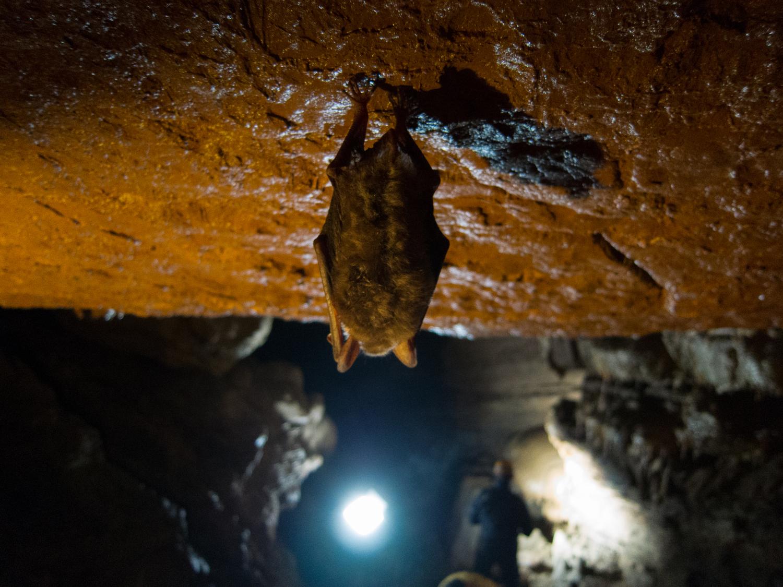 Невидимото богатство на подземния свят