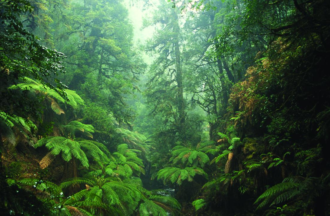 Tarkin Forest