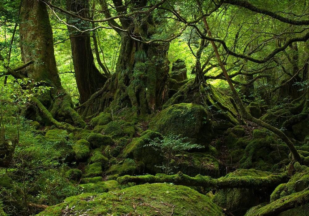 Най-старите сред горите