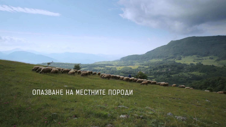 Традиции, местни породи и Балкана