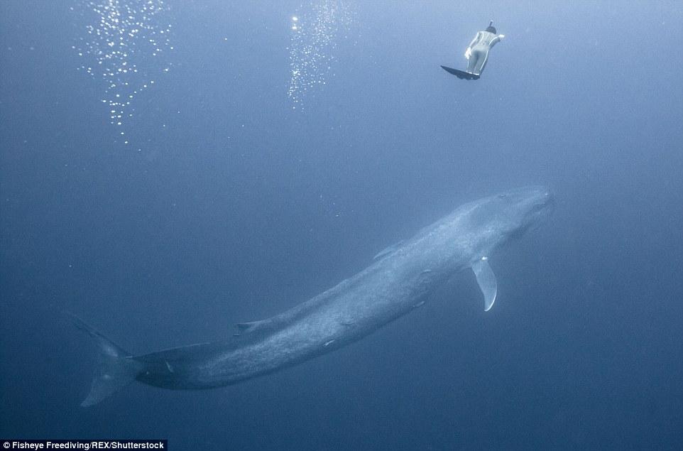 На един дъх сред китове