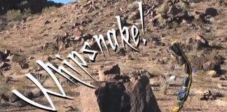 The Whipsnake