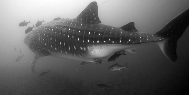 Михаил Заимов: Светът под водата
