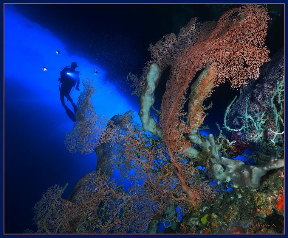 николай христакиев подводен свят