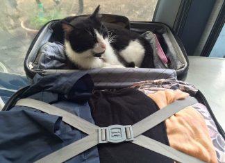 Мъркащ пътешественик