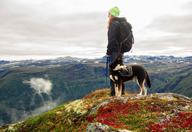 преход, куче, туризъм, планина