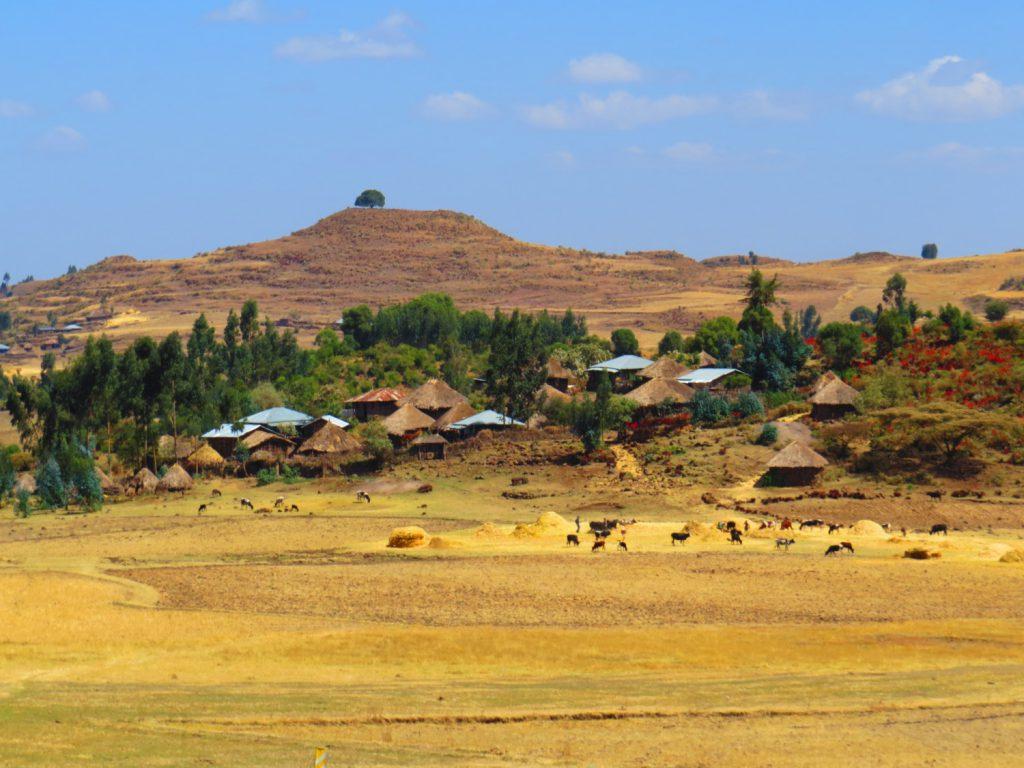 Етиопия, Ира Кюрпанова