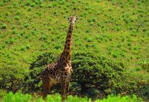 Парапланеризъм в Кения