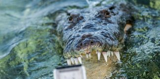 Да плуваш с 4-метрови крокодили