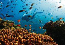 Големият бариерен риф
