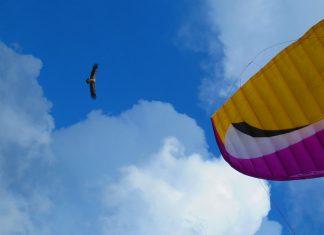 Полет с лешояд в Хималаите фотография: Ира Кюрпанова