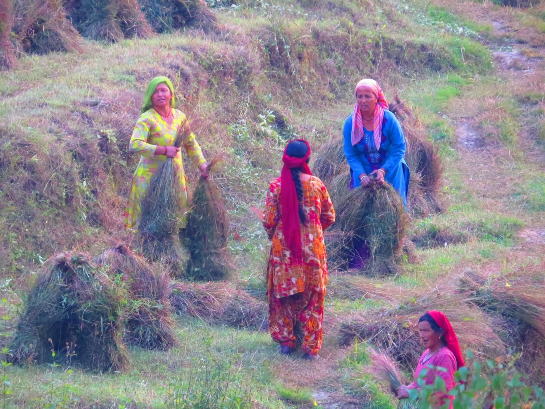 Събиране на реколтата, Бир автор: Ира Кюрпанова