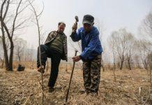 Да вдъхнеш живот на повече от 10 хиляди дървета