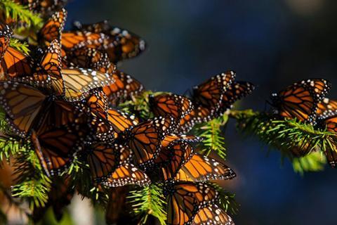 Долината на пеперудите, Турция снимка: tihorad.com