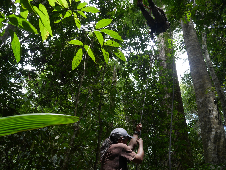 SoADVENTUROUS: джунгли, индианци и досадни папагали