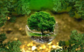 5 страни, които мислят зелено