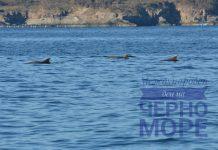 Международния ден на Черно море