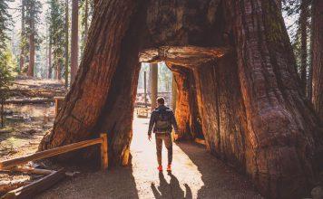 Кадър: Yosemite National Park ; ARTUR DEBAT/GETTY
