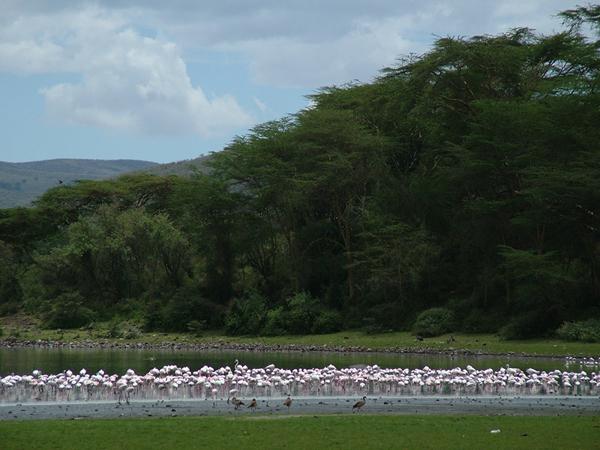 Naivasha lake