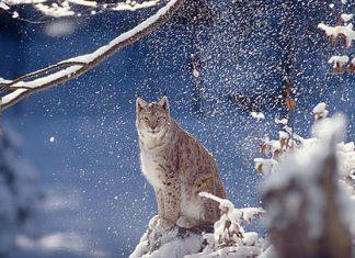 © WWF-Canon/Roger LeGUEN