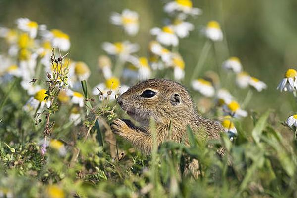 © Wild Wonders of Europe/Konrad Wothe/ WWF