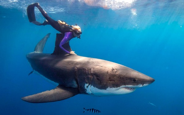 Костюм против акули