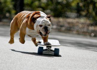 Скейт животни