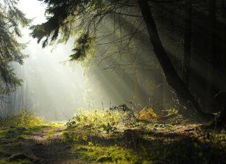 Пътуваща изложба за българските гори