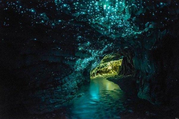Waitomo Glowworm, Нова Зеландия
