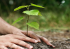 Залесяване в района на Владая
