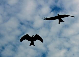 Дружество за защита на птиците търси доброволци за Маджарово