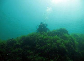 """Презентация """"Има ли живот в Черно море?"""""""